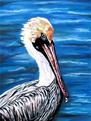 I Only Look at Pelicans