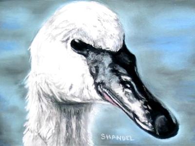 Swans Way-Trumpeter Swan