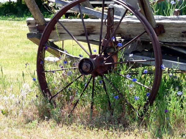 Rusty Wheel and Flowers
